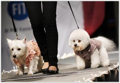 02 Бизнес-идея: создание сайта по рекламе модной одежды для животных