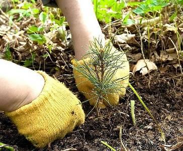 b275393e3d973fcbca095912ec312409_x1024 Бизнес идея для малого бизнеса: заработок на продаже лесных саженцев