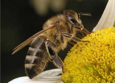 16430943474b734d8a55203 Бизнес-идеи: Организация пчеловодства и предварительные расчеты медосбора в лесных угодьях