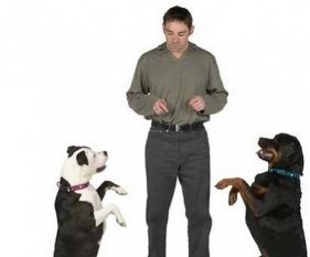 moskva-professionalnaya_dressirovka_sobak_vseh_porod_v_moskve_podmoskove_s_vyezdom_7504 Бизнес идея: школа дрессировки собак