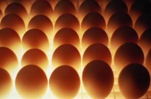 food_eg-040-g-0040-300x198 2 разные бизнес идеи: оптовая продажа яиц и выращивание роз
