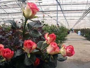 2b-300x228 Основные тонкости цветочного бизнеса